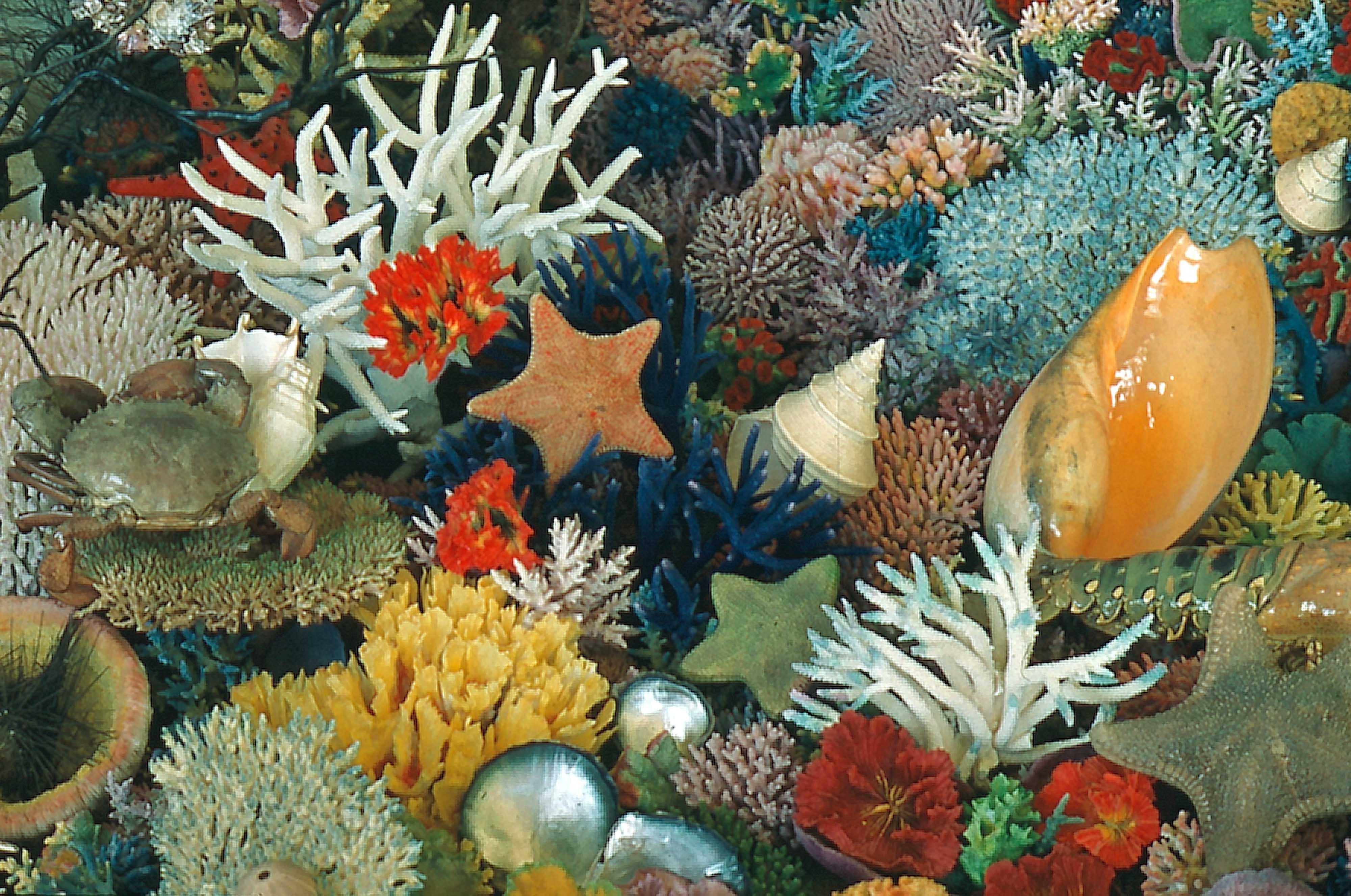 coloured coral collection queensland historical atlas