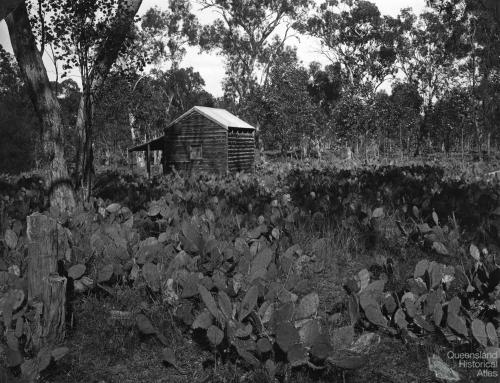 Prickly pear treatment, Chinchilla, 1928-29