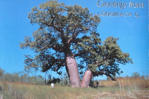 Greetings from Longreach postcard featuring the bottle tree