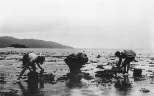 Fossicking at low tide was one of the main activities for early holiday makers, c1932