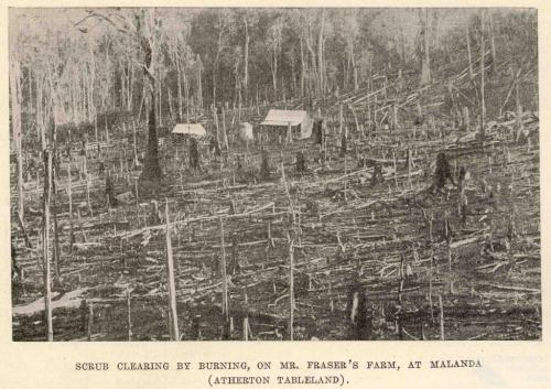 Scrub clearing by burning, Malanda, 1918