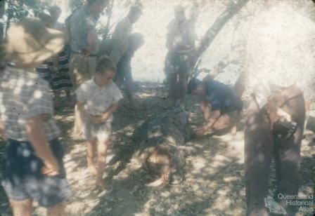 Captured crocodile, Normanton River, 1973