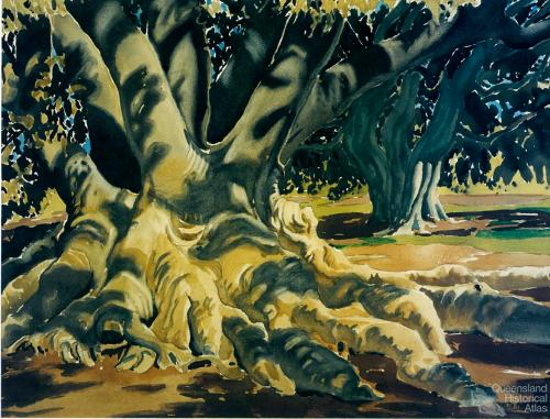 Fig tree roots, c1954