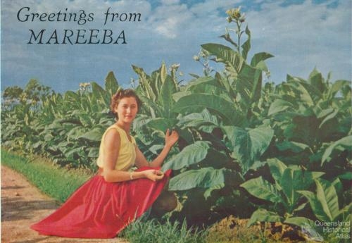 Mareeba, the tobacco capital of Australia, c1961