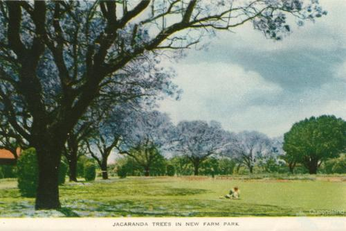 Jacaranda trees in New Farm Park, c1958