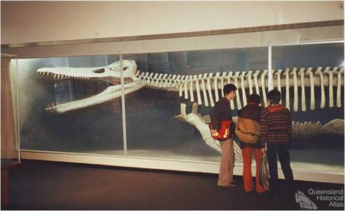 Kronosaurus queenslandicus at Harvard, 2001