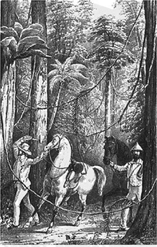 Cutting through the scrub, 1848