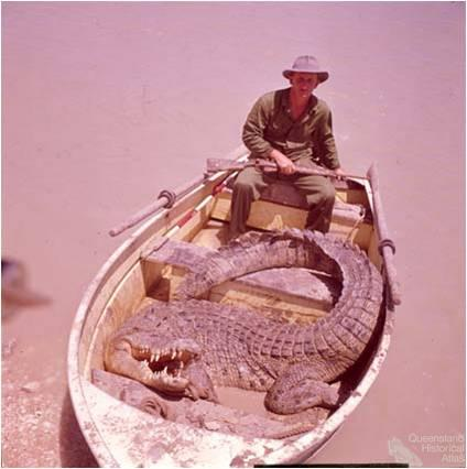A large saltwater crocodile killed in the Queensland Gulf Country, 1964