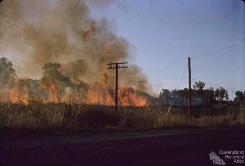 Burning sugar cane near Cairns, 1965
