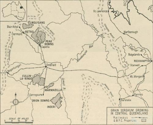 Grain sorghum growing in central Queensland, Walkabout, June 1951