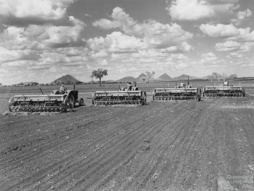 Planting the first sorghum crop on Peak Downs, January 1949