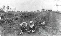 Atthow's pineapple farm, Lindum, Brisbane, 1914