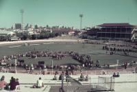 Cattle judging, main arena, Brisbane exhibition, Bowen Hills, c1980s