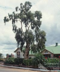 Tree of Knowledge, Barcaldine, 1991