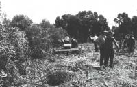 Methods for removing brigalow, 1964