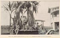 Italian cane farmers, 1932