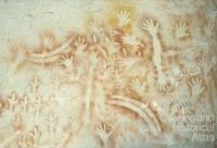 Aboriginal rock art, Carnarvon Gorge, 1980