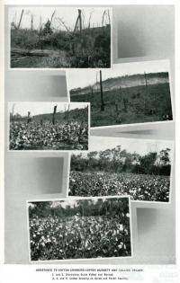 Assistance to cotton growers, Upper Burnett and Callide Valley, 1937