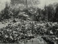 Inside the Gordonvale garden gazebo, 1935