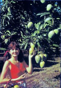 Promotional postcard for the Bowen mango