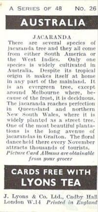 Jacaranda card, 1959