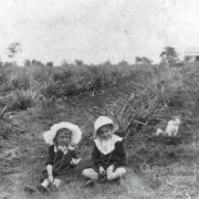 Atthow's pineapple farm, Lindum, Brisbane, 1914