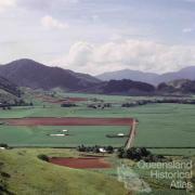 Sugar cane, Atherton Shire, 1966