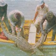 Crocodile hunting, North Queensland