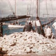 Pearl shell on the wharf, Thursday Island, 1958