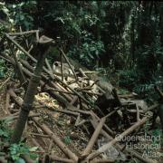 Remains of the 1937 Stinson airplane crash, Lamington National Park, 1978