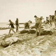 A group of visitors prepare for turtle riding at Mon Repos, c1930