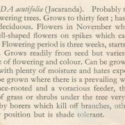 Jacaranda from Harry Oakman, Gardening in Queensland, 1960