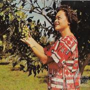 Promotional postcard for the macadamia, Hawaii