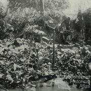 Inside the Gordonvale garden gazebo, 1935