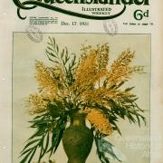 Bloom of the silky oak, The Queenslander, 17 December 1931