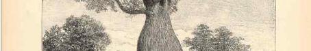 Bottle tree, 1892