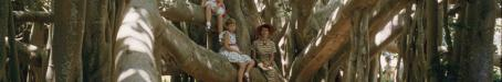 Banyan tree, Ormiston, 1959